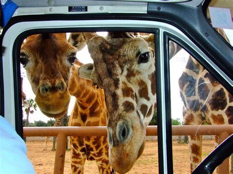 ingresso zoo fasano zoo safari fasano