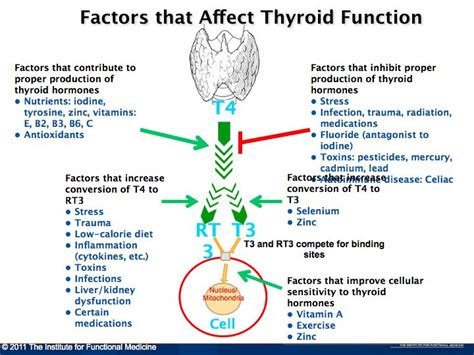Does Detox Affect Thyroid by Understanding Factors That Affect The Thyroid Diagram 001