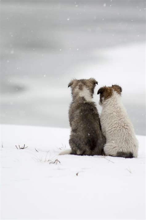 puppies in the snow puppies in the snow pictures photos and images for and