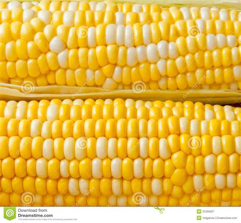colors of corn bi colors corn background royalty free stock photography