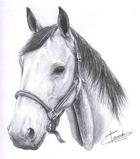 caballo a lapiz dibujos de animales caballos para dibujar a lapiz www imgkid com the image