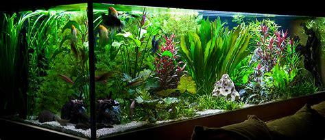 Aquarium Dekorieren Ideen by 1120 Liter S 252 223 Wasser Aquarium 200x80x70