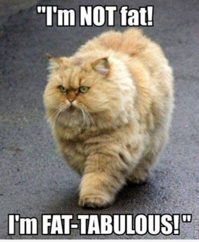 Fat Cat Meme - i m not fat cat meme animals that are super cute