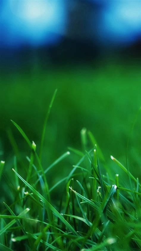 iphone wallpaper green grass wallpaper iphone 6 plus grass green 5 5 inches 1080 x