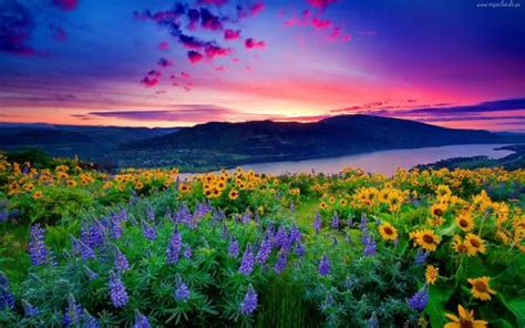 wallpaper pemandangan alam yg cantik gambar pemandangan indah di dunia24 setangkai