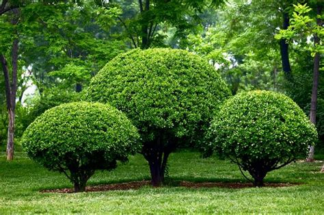 small trees and shrubs for landscaping in front yard hot landscaping przycinanie krzew 243 w