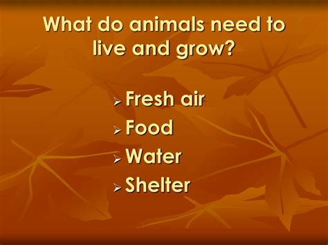 ppt animals grow and change by denise carroll powerpoint