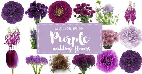 Wedding Bouquet Names by Complete Guide To Purple Wedding Flowers Purple Flower