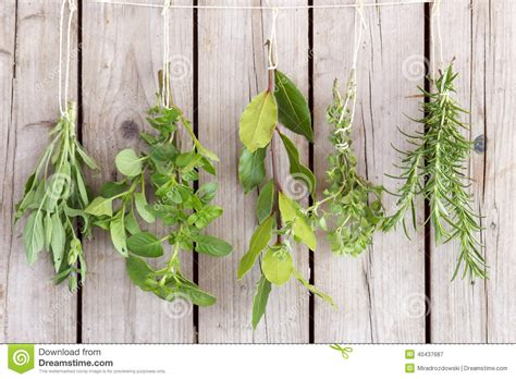 hanging bunches of fresh spicy herbs isolated on white herbs bunches stock photo image 40437687