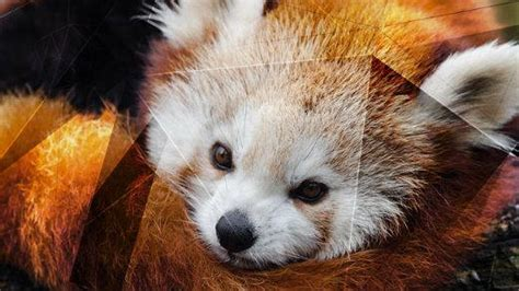 firefox extensions  install  opensourcecom