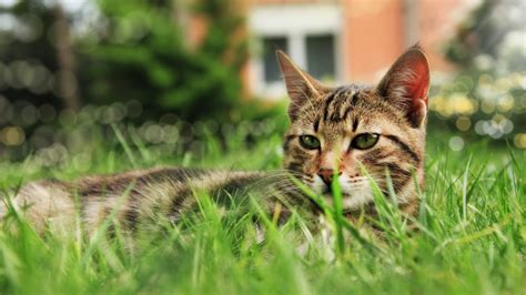 keep cats in backyard how to keep cats out of your yard sandbox and other