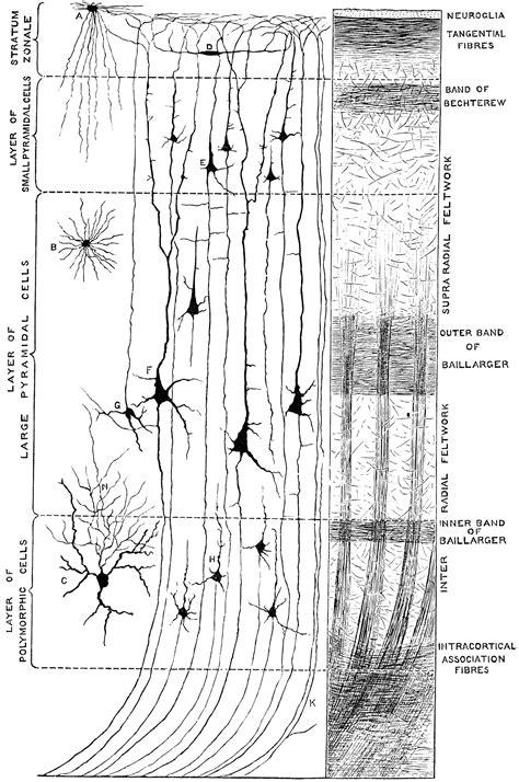 6 data structures in 6 minutes michelle medium minute structure of cerebral cortex clipart etc
