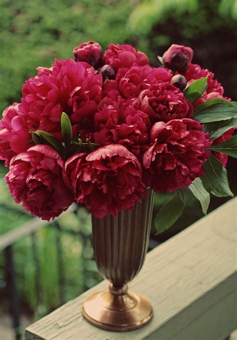 Peony Garden Cranberry Design Ideas 18 Best Peonies Images On Beautiful Flowers