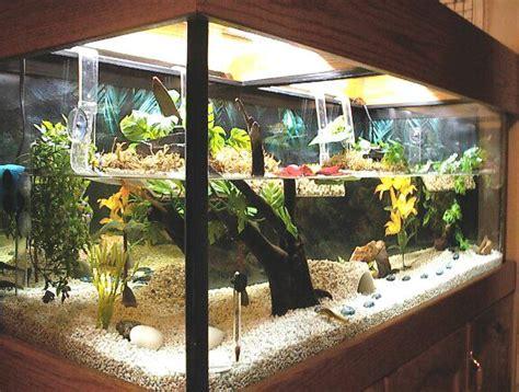 images  terrariums    amphibians