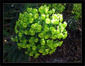 Which Gardening Zone Am I In - plant identity green flowers 01 jpg 1 1