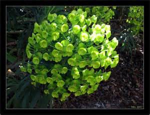 Green Garden Flowers Plant Identity Green Flowers 01 Jpg 1 1 Gardenbanter Co Uk