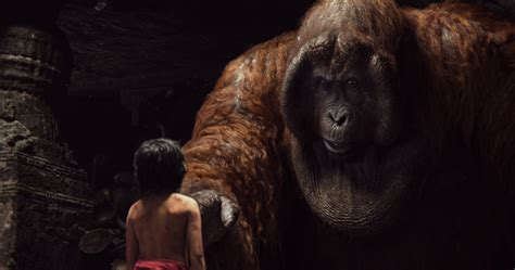 pictures of the jungle book est100 一些攝影 some photos the jungle book 2016 與森林共舞