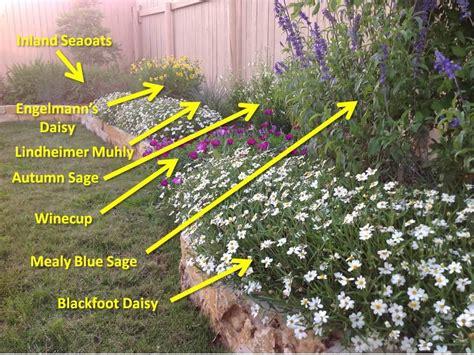 heat tolerant crops best 25 texas plants ideas on pinterest texas plants