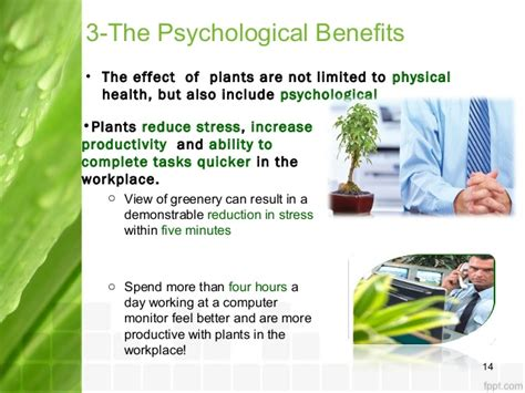 benefits of houseplants discover huge benefits of plants in your workplace