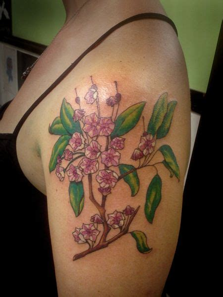 mountain laurel tattoo 88 best mountain laurel images on laurel
