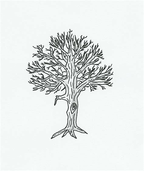 tree diagram coloring page free coloring pages of parts of a tree diagram