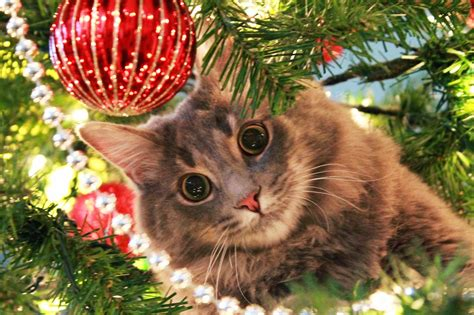 exclusively cats veterinary hospital blog warm holiday