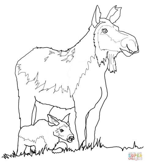 coloring book pages moose cow moose and calf coloring page free printable coloring