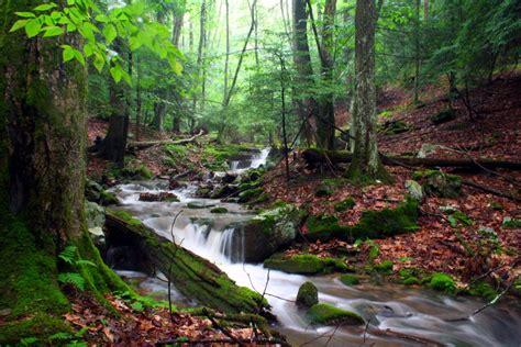 State Gardens by File River State Park Run 1 Forestwander Jpg