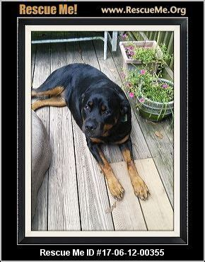 rottweiler rescue pa best 25 rottweiler rescue ideas on rottweilers pictures of rottweilers