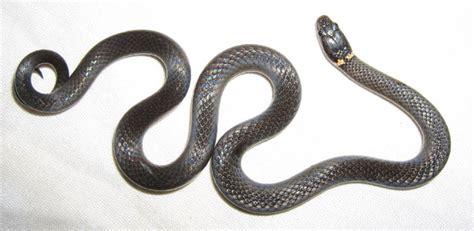 black florida snake identification 2017 2018 best cars