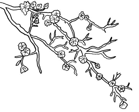 coloring page tree branch cherry blossom coloring pages download free printable