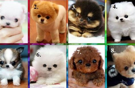 show me a picture of a puppy tag for show me pictures of pets litle pups