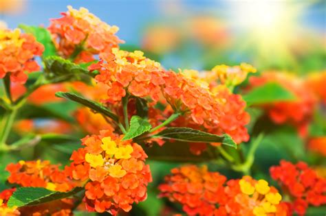 10 best flowers to plant in the summer taskeasy blog