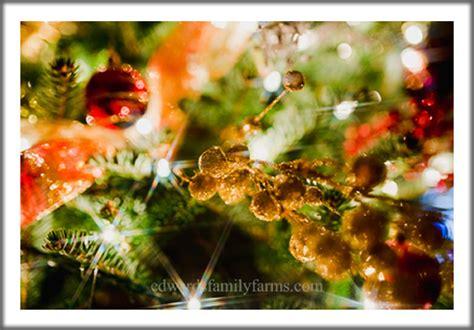 christmas tree farm in sparta nc real christmas trees