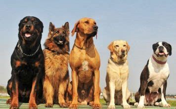 what of puppy should i get 40 easy recipes pei magazine