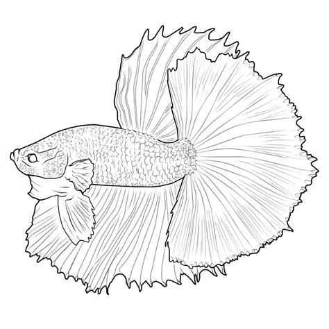 digital betta painting and free lines betta fish and