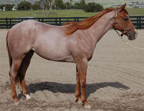 Charle Roan colours jumping beans