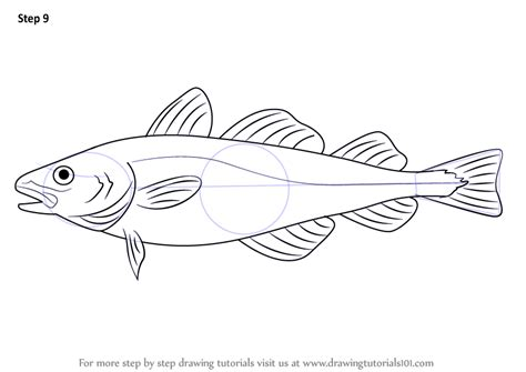 coloring pages of cod fish step by step how to draw an atlantic cod