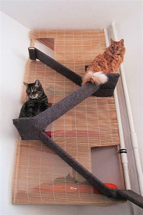 using a dead corner a cat climb with hidden quot rooms