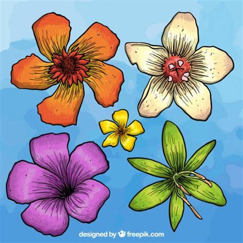 fiori disegnati e colorati disegnati a mano fiori colorati scaricare vettori gratis