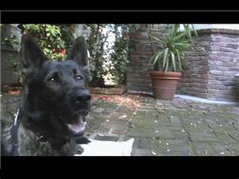 how to house train a grown dog dog breeds dog training how to house train adult dogs