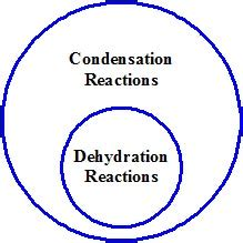 condensation or dehydration dehydration reaction definition exles