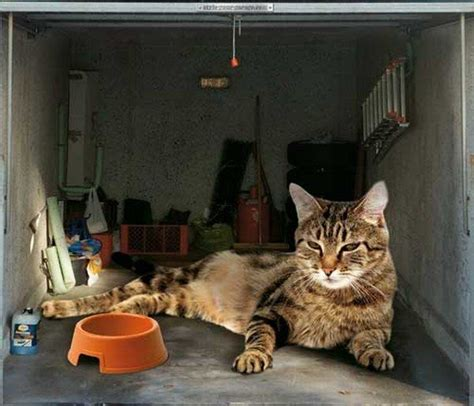 Cat Doors For Windows Decor Amazing Garage Door Decals Cat Picture Design Ideas