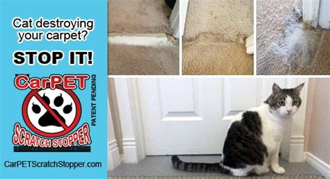 how to get your cat to stop scratching the couch stop cats from scratching carpet carpet vidalondon