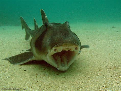 jackson shark real monstrosities jackson shark