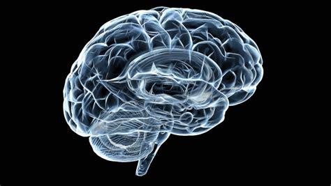 brain x 3d brain x rotation stock footage 1175041