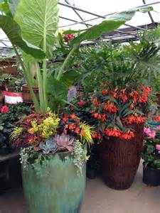 17 best images about tropical outdoor plants on pinterest gardens container gardening and