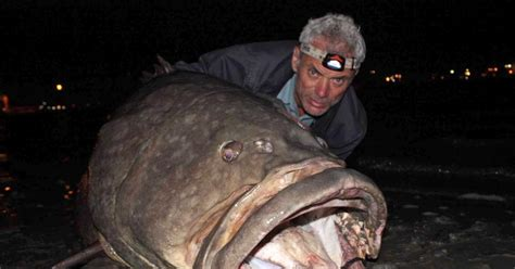 Pictures Of River Monsters river monsters photos river monsters ny daily news
