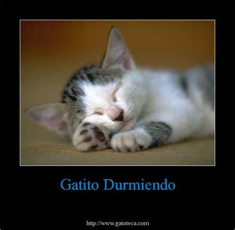 imagenes de gatos tristes con mensajes imagenes tiernas de gatos con frases de amor imagenes de