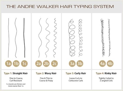curl pattern hair types curl pattern curls potions